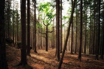 Grüner saftig frischer Baum steht in einem Todwald