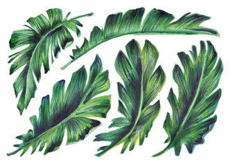 Set of tropical leaves. Botanical watercolor illustrations of the jungle, floral elements. A collection of exotic banana leaves isolated on a white background. Beautiful illustration for textiles
