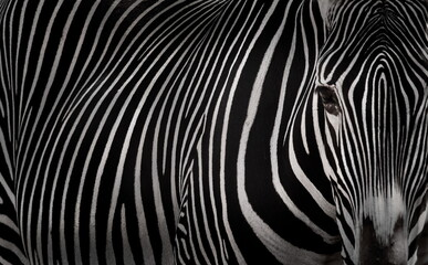 Canvas Prints Zebra zebra skin pattern