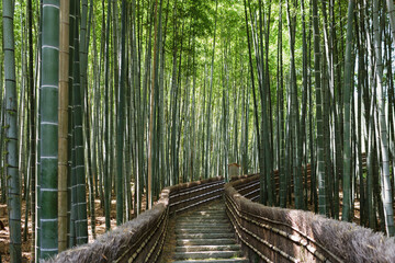 Poster Bamboe Path towards a Bamboo forest