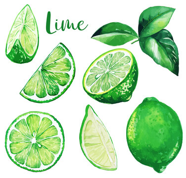 Fresh green limes and leaves, watercolor fruit