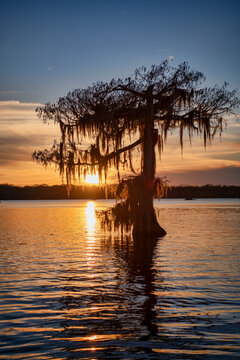 Moss Draped Cypress Tree Reflected in Lake Martin at Sunset in St. Martin Parish Louisiana