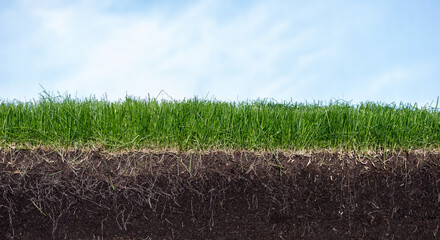 Green section of a grass with the soil and roots under blue sky