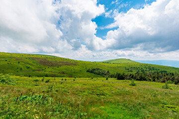 Wall Mural - grassy meadows of mnt. runa, ukraine.  beautiful nature scenery of carpathian mountains in summer. cloudy weather
