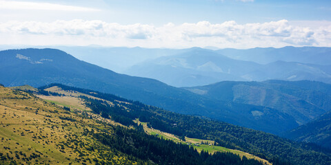 Wall Mural - hills and valleys of carpathian mountains. trees and bushes on the grassy slopes.  beautiful landscape on a sunny day. clouds on the blue sky