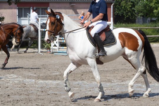Man riding a pinto horse at trot