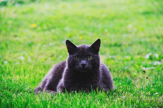 Black cat lying on the grass
