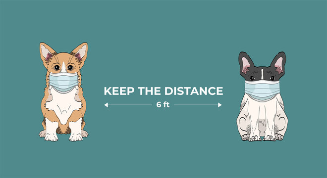 Keep safe distance two meters or six feets.  Coronavirus infection spreading prevention information sign with cute hand drawn dogs in medical masks on blue background. Welsh corgi and french bulldog