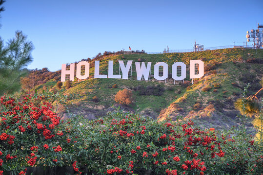 The Hollywood sign. Built in 1923, is world famous landmark and American cultural icon on Mount Lee