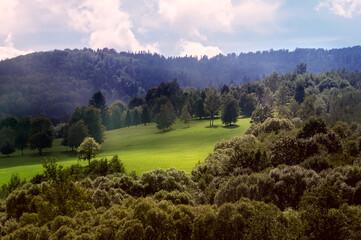 Fototapeta Widok oświetlonej polany z różnymi gatunkami drzew w ciepłych zielonych kolorach obraz