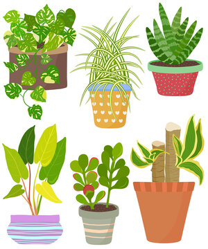 Vector set indoor house plant in pot. English Ivy, Spider plant, Crassula, Janet Craig, African spear, Philodendron lemonlime. Collection of flat styled hand drawn exotic houseplant.