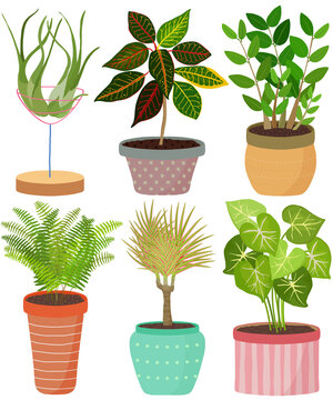 Vector set indoor house plant in pot. English Ivy, Spider plant, Crassula, Janet Craig, African spear, Philodendron lemonlime. Collection of flat styled hand drawn houseplant.