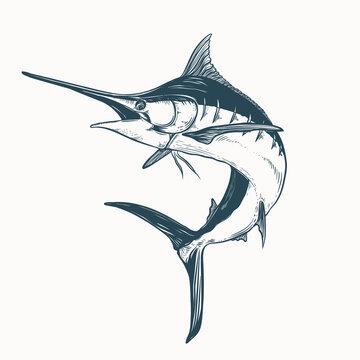 hand drawn marlin tattoo artwork illustration