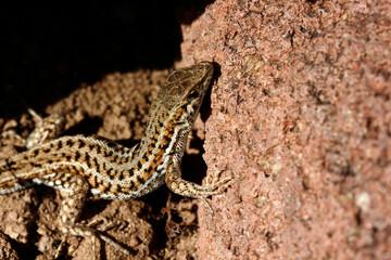 cute lizard in nature close-up