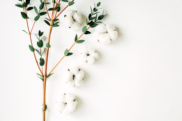 Eucalyptus branch and cotton on a white background with free space