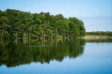 Widok na wiosenny las nad jeziorem. Leśne jezioro wiosną. wiosenny las jezioro krajobraz