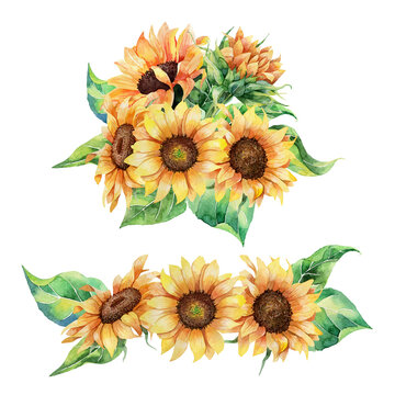 Hand drawn watercolor set of realistic botanical sunflowers and leaves