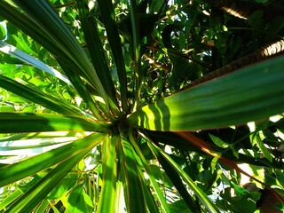 Canvas Prints Palm tree Planta