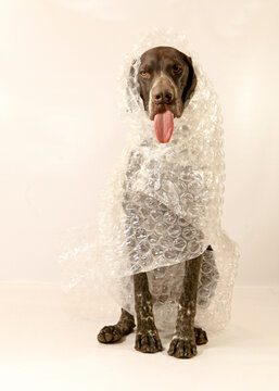 Dog wrapped in Bubble wrap