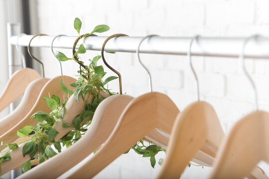 植物の絡まるハンガー