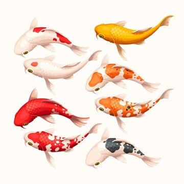 Vector set of high detailed koi fish