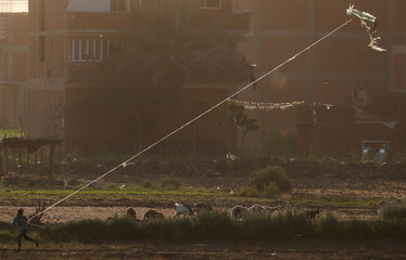 """A boy flies a handmade kite near sheep, in agriculture land named """"El Shouna"""" at el-Marg district, east of Cairo"""
