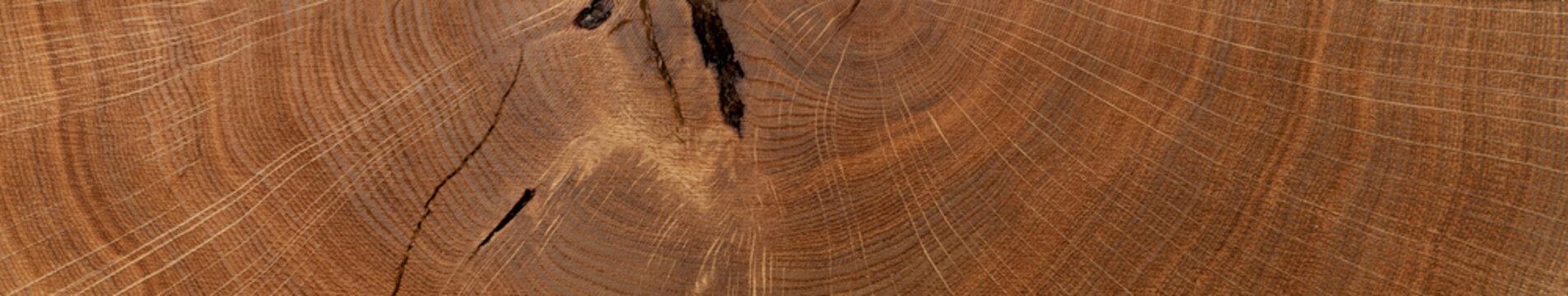 end grain wood texture of Oak tree