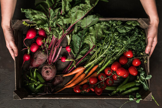 Woman hands holding wooden box with fresh vegetables on dark background. Healthy organic food, vegetables, agriculture, top view