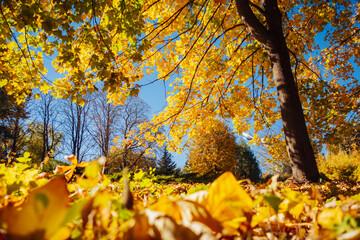 壁紙(ウォールミューラル) - The bottom view of trees in warm light. Location place Ukraine, Europe.