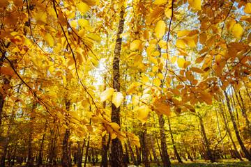 壁紙(ウォールミューラル) - Breathtaking view of magic trees in warm light. Location place Ukraine, Europe.