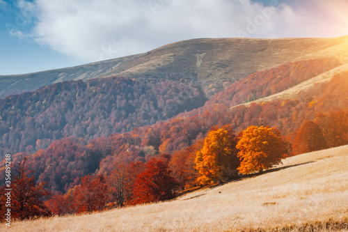 Wall mural Breathtaking morning moment in alpine foggy valley. Location place of Carpathian mountains, Ukraine, Europe.