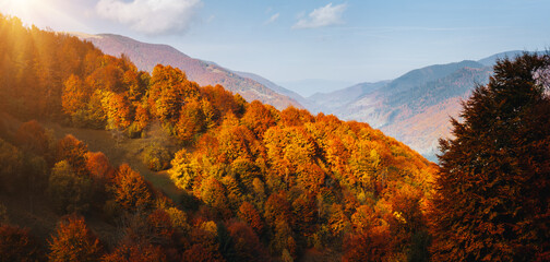 壁紙(ウォールミューラル) - Bright autumn forest on a mountain slope.  Location place of Carpathian mountains, Ukraine, Europe.