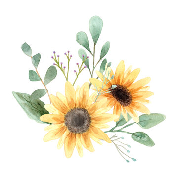 Hand drawn watercolor sunflower flower