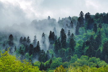 Oustanding 8k panoramic view of Carpathian forest and mountains in spring. Bieszczady, Poland.