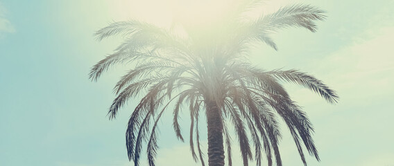 Canvas Prints Palm tree Tropical palm tree leaves in hot summer day as vintage background, nature and travel concept