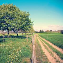 Papiers peints Olive Paysage de campagne sous le soleil de printemps.