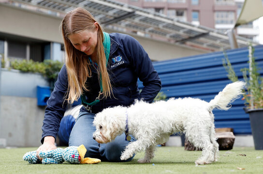 Rehoming and Welfare Assistant Marina Elands takes Charlie, a Bichon Frise, for her daily exercise at Battersea Dogs and Cats Home, in London