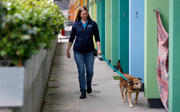 Rehoming and Welfare Assistant Marina Elands takes Paddy, a mongrel, for a walk at Battersea Dogs and Cats Home, in London
