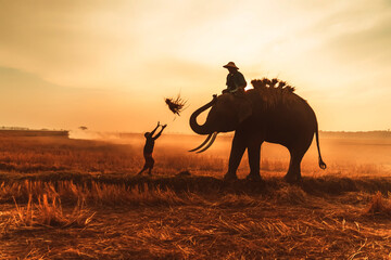silhouette of lifestyle people and elephants at elephant villages in Surin province, Thailand.