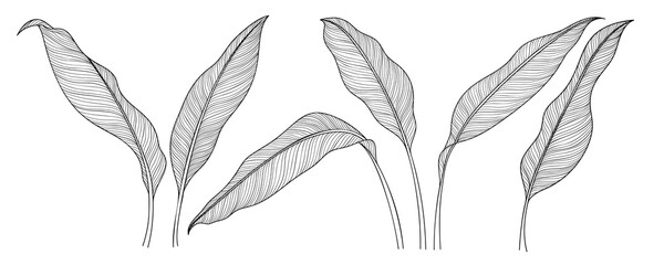 Exotic tropical leaf hand drawn vector. Botanical leaves black and white engraved ink art. Design for fabric, textile print, wrapping paper, fashion, interior design and cover. Wall mural