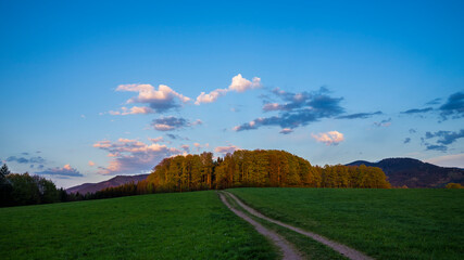 Germany, Slow moving shadow of sunset light on trees at the edge of the forest of black forest nature landscape