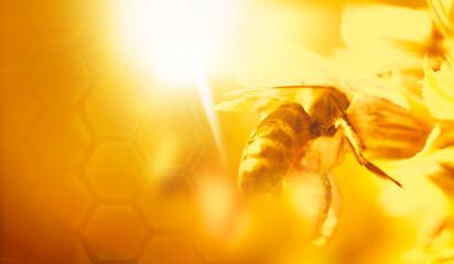Foto op Textielframe Bee honey bee background