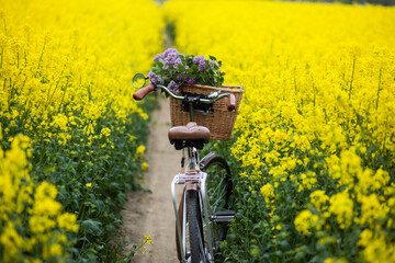 vintage bike with a bouquet of lilac flowers in the wicker basket in the summer blooming rapeseed field