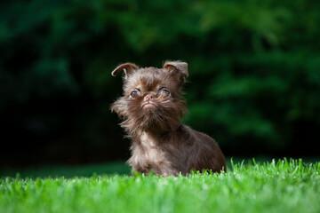 image of dog grass background