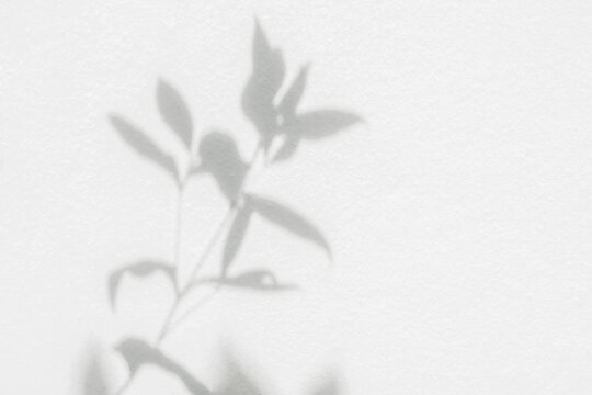 Shadow and light from sunlight of natural leaf plant tree branch on white wall. Nature blurred background