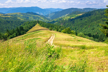 Wall Mural - mountain landscape in summer. blue sky with fluffy clouds. road through green meadow. hills rolling into the distant valley. callm nature scenery of carpathian countryside