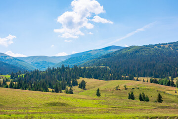Wall Mural - mountainous rural landscape. beautiful scenery with trees and fields on the rolling hills at the foot of the borzhava ridge. natural and sustainability development concept