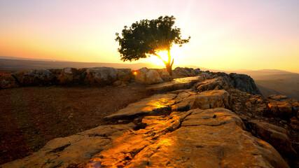 Sun slihouetting single tree from Mount Arbel Israel near the Sea of Galilee. Fotobehang