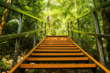 (Selective focus) Stunning view of a walkway along the tropical rainforest of the Taman Negara National Park. Taman Negara National Park is the world's oldest rainforest in Malaysia.