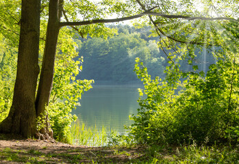 A lonely forest lake in nice summer weather, on its shore there are bushes and trees.